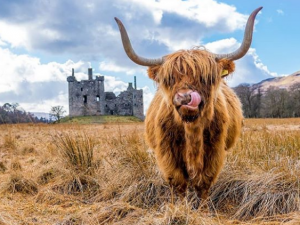 A Different Breed of Tourism | The Hairy Coo (Startup Success Story)