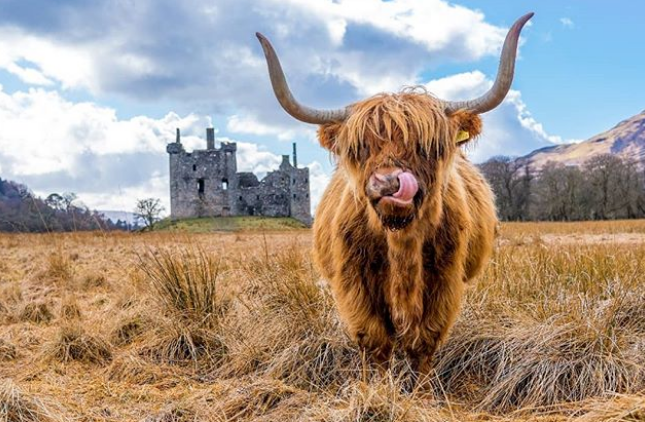 Zaui Tourism Software - The Hairy Coo - Edinburgh, Scotland