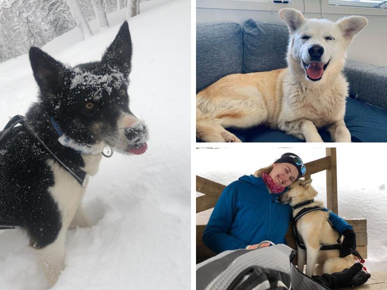 Bringing Paw-sitivity to the Tromsø Community